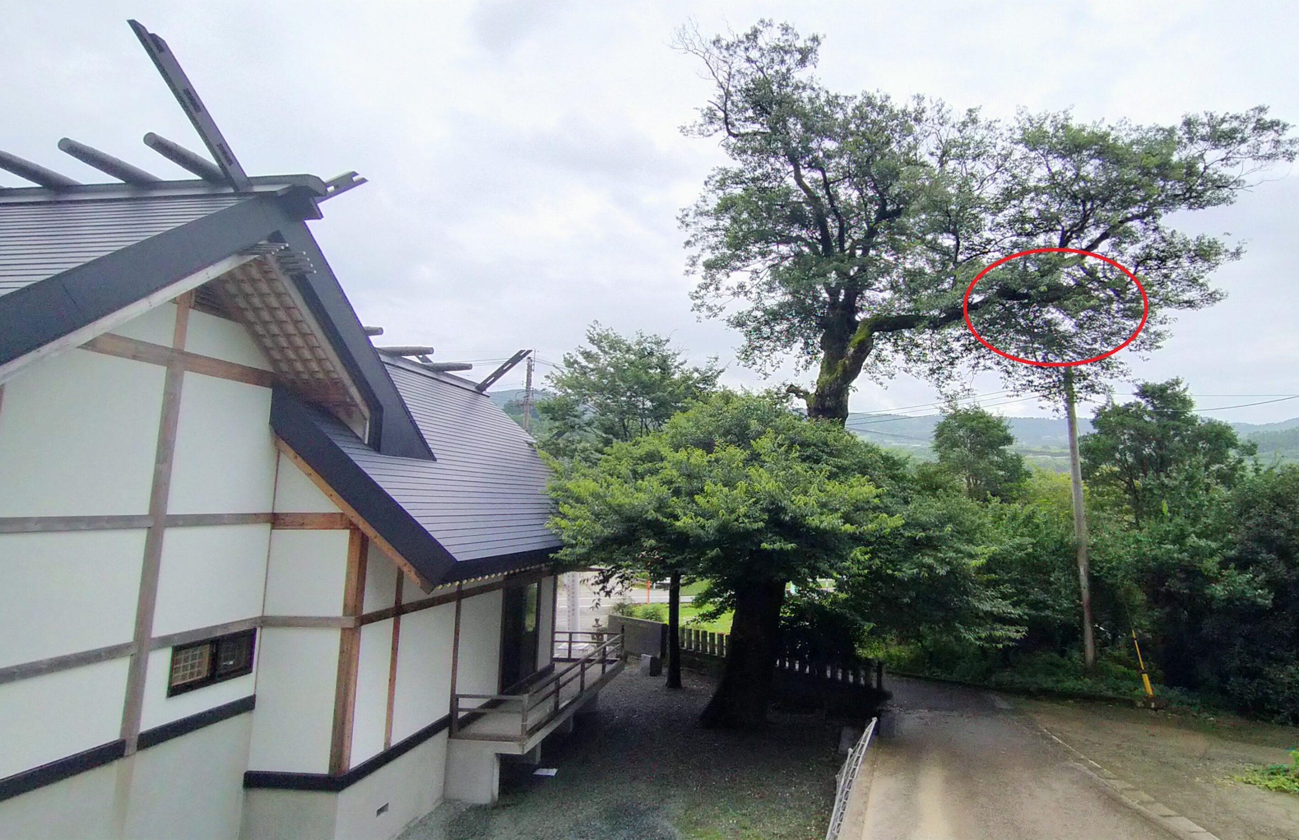 白山姫神社のフクロウ